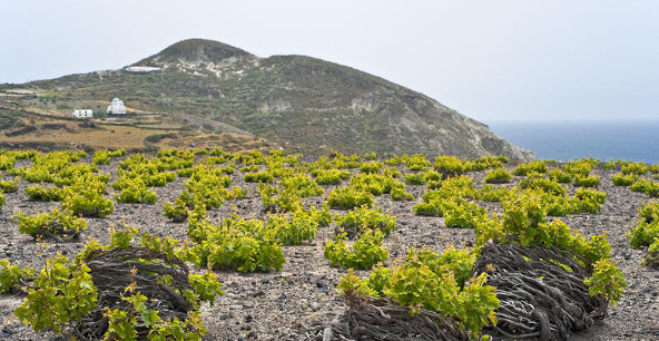 Wine in Moderation and wine tourism